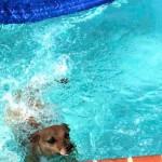 Photo Friday: Swim to Shore